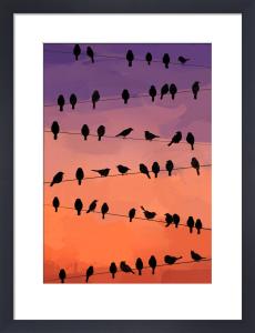 Flock by Jeremy Harnell