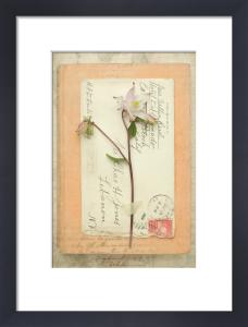Austen by Deborah Schenck