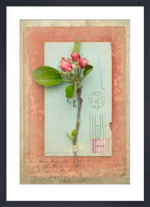 Wordsworth by Deborah Schenck