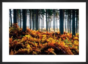 Ferns nr. Falston by Scott Dunwoodie