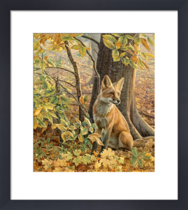 Eyes of Autumn by Kalon Baughan