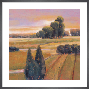 Summer Cypress by Adina Langford
