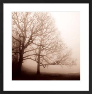 Serenity by Erin Clark