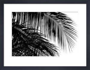 Palms 3 by Jamie Kingham