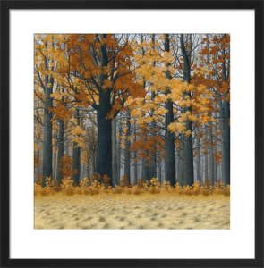 Autumn Wood by Tim Arzt