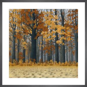 Autumn Wood by Tim Arzt