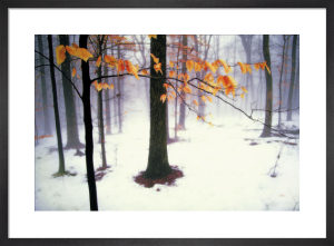 Quiet Woods by David Lorenz Winston