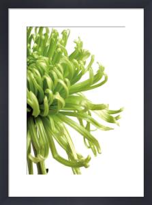 Green Bloom 2 by Jenny Kraft