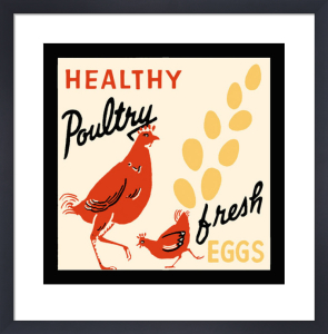 Healthy Poultry-Fresh Eggs by Retro Series