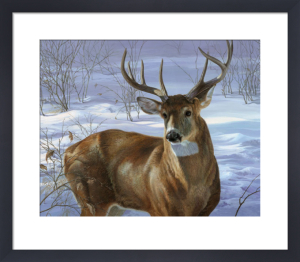 Through My Window - Whitetail Deer by Joni Johnson-Godsy