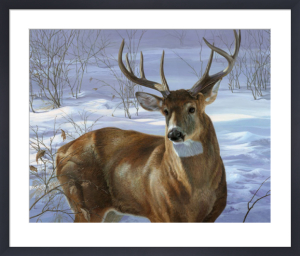 Through My Window - Whitetail Deer by Joni Johnson-Godsy