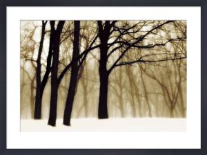 Past Dreams by David Lorenz Winston