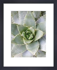 Cactus 3 by Jenny Kraft