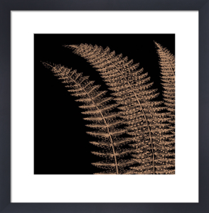 Fern I (on black) by Botanical Series