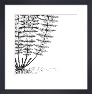 Fern IV (on white) by Botanical Series