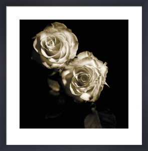 Circus Roses by Michael Harrison