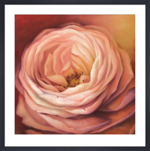 Rose Portrait by Lisa Audit