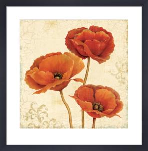 Poppy Bouquet I by Daphne Brissonnet