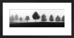 Tree Line by Erin Clark
