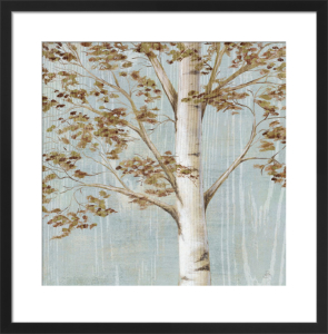 Birch Study I by Daphne Brissonnet