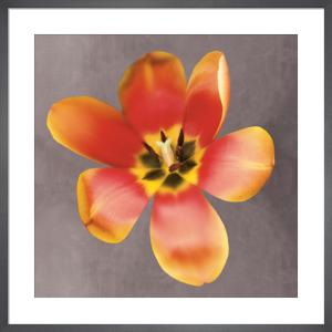 Sunshine Tulip by Erin Clark