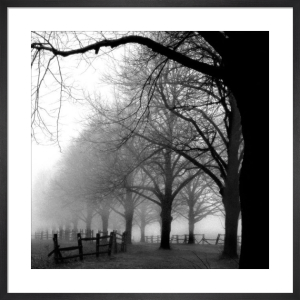 Black and White Morning by Harold Silverman