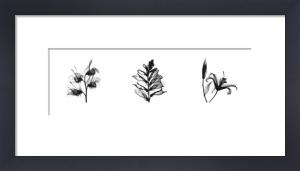 X-Ray Foxglove Triptych by Bert Myers