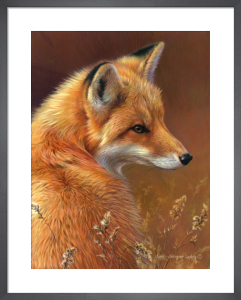 Curious- Red Fox by Joni Johnson-Godsy