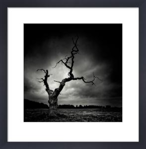The Last Tree by Marcin Stawiarz
