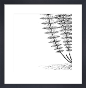 Fern III (on white) by Botanical Series