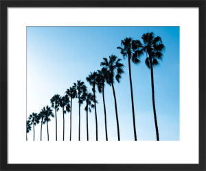 La Jolla Palms by Jenny Kraft