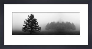 Misty Pines by Erin Clark