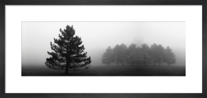 Misty Pines by Erin Clark