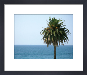 Palm at Moonlight Beach by Jenny Kraft