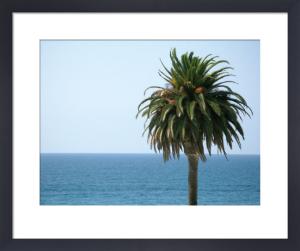 Palm at Moonlight Beach by Jenny Kraft