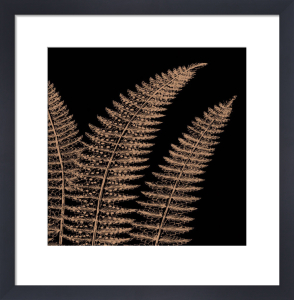 Fern II (on black) by Botanical Series