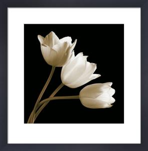 Three Tulips by Michael Harrison