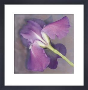 Parfum by Erin Clark