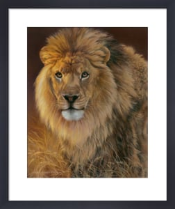 Power and Presence- African Lion by Joni Johnson-Godsy