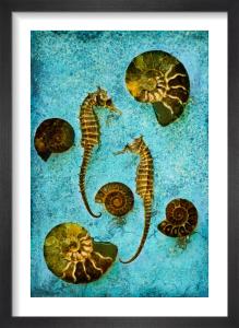Sea Study I by Doug Chinnery