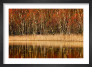 Reflection of Autumn by Fortunato Gatto
