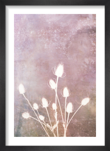 Harvest Passion in Blush by Doug Chinnery