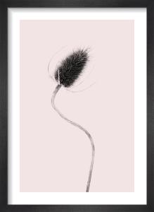 Bantham Thistle by Deborah Schenck