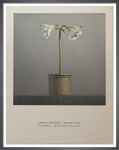 Amaryllis by James Moore