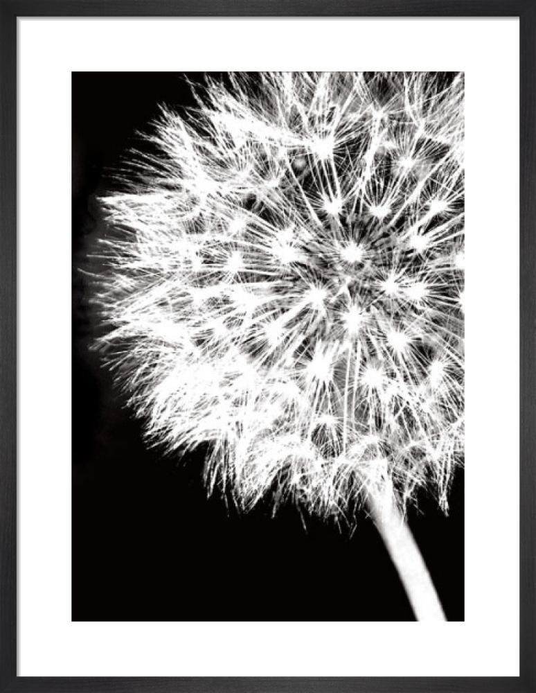 Dandelion Crop by Jenny Kraft