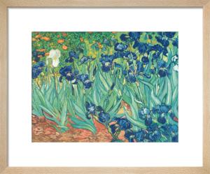 Irises in the Garden by Vincent Van Gogh