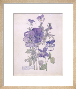 Wild Pansy and Wood Violet by Charles Rennie Mackintosh