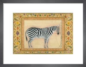 A zebra, 1621 by Mansur