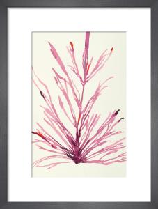 Plants 2 by Susan Hable