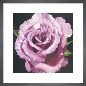 Rose by Elizabeth Hellman